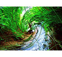 Willow Wizard ~ Commanding the Wave Photographic Print