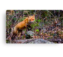 Fox on the Run Canvas Print