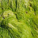 Seagrass by Werner Padarin