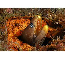 Green Moray Photographic Print