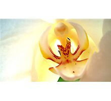 White Orchid 1 Photographic Print