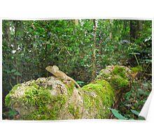 Rainforest dragon Poster