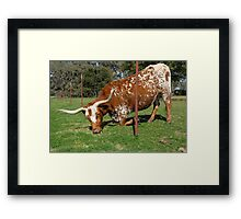The grass is always greener on the other side of the fence . . .  Framed Print