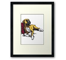 lying boxer Framed Print