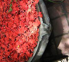 Fire Flowers by Priyanka Joseph