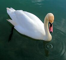 Swanning Around by Mibby