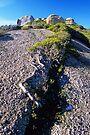 Mt Bishop by Travis Easton