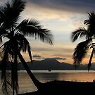 Tropical Palm trees at sunrise near Cairns, Australia.  by Victoria Ashman