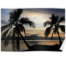 Tropical Palm trees at sunrise near Cairns, Australia.  Poster