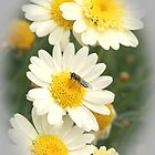 Daisies and friend by wildrider58