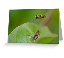 Hoverfly Egg Laying ? Greeting Card