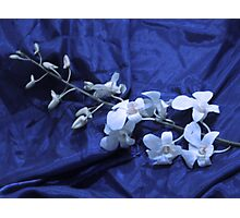 Orchid Stalk Photographic Print