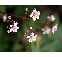 Rock Garden Flowers Photographic Print