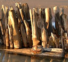 Driftwood Sculpture by Mibby