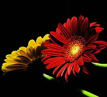 Red and Yellow by jerry  alcantara