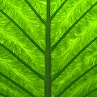 green palm leaf by srphotos