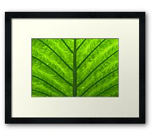 green palm leaf Framed Print