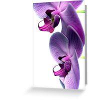 Duo Greeting Card