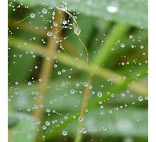 Dew Web Photographic Print