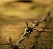 Barbed by Lewis Packman