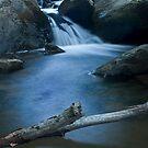Pocket wilderness by BigRPhoto