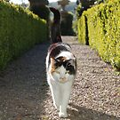 poppy - my profile cat :) by sarahnewton
