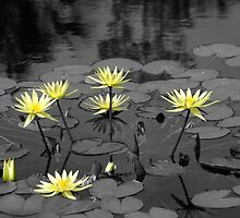 Lilys by kld73