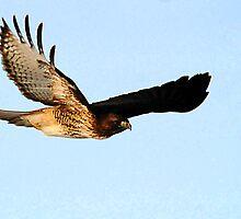 Flying Predator by Ryan Houston