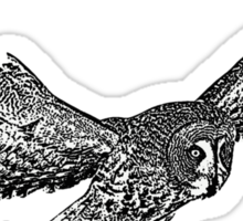 Great Grey Owl in flight Sticker