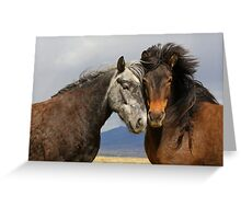Beauties - Icelandic horses  Greeting Card