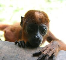 Baby woolly monkey by Thomas Entwistle