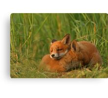 Better than pillow Canvas Print