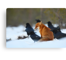 Moment with ravens Canvas Print