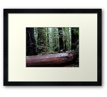 humility, awe & respect Framed Print