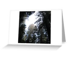 the canopy Greeting Card