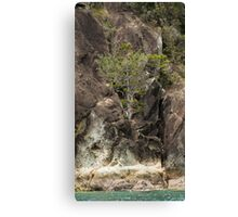Rock Grows Pinetree Canvas Print
