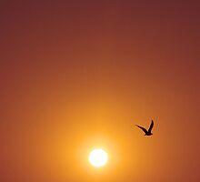 ... 6:49 am ... by RoughDiamond