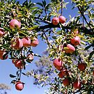 Apples on Branches by ~ Fir Mamat ~