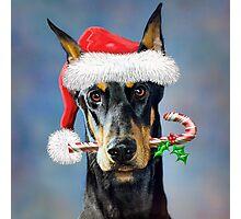Doberman Christmas Photographic Print