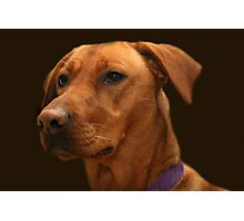 ~VIZSLA~ Photographic Print