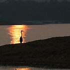 Heron in Sunset by KBSImages
