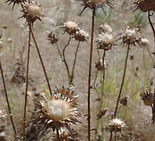 Scotched Thistles by Clare McClelland