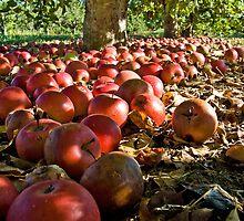 Apple Harvest by BigRPhoto