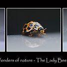 Wonders of Nature - The Lady Beetle by Ben Shaw