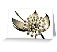 Hoya Greeting Card