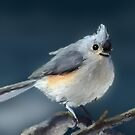 Titmouse by saleire