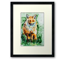 Red fox Framed Print