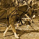 Working Horse by BigRPhoto
