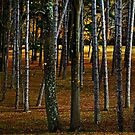 Into the woods, darkly by cclaude