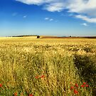 Poppies and cloud by Silvia Ganora